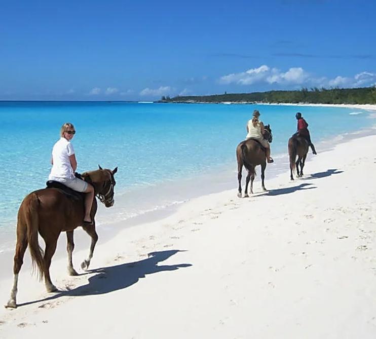 Horse Riding Activities in Zante